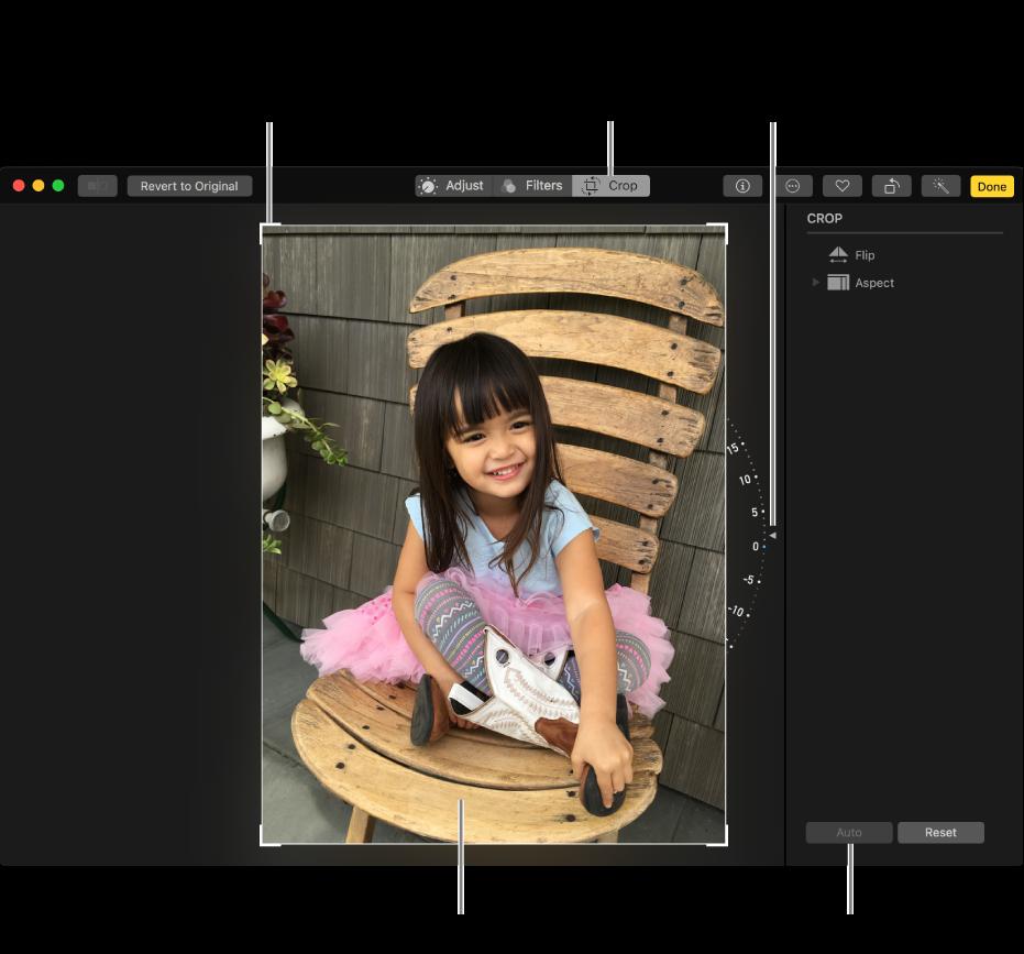 显示含裁剪和校正选项的照片窗口。