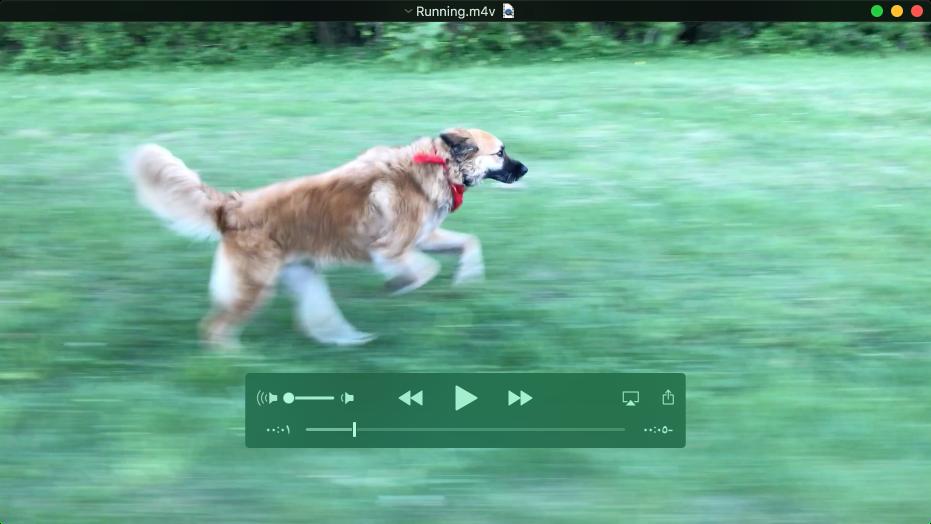 نافذة QuickTimePlayer أثناء تشغيل فيلم مع ظهور عناصر التحكم في التشغيل.