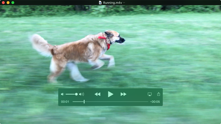 The QuickTime Player window playing a movie with the playback controls showing.