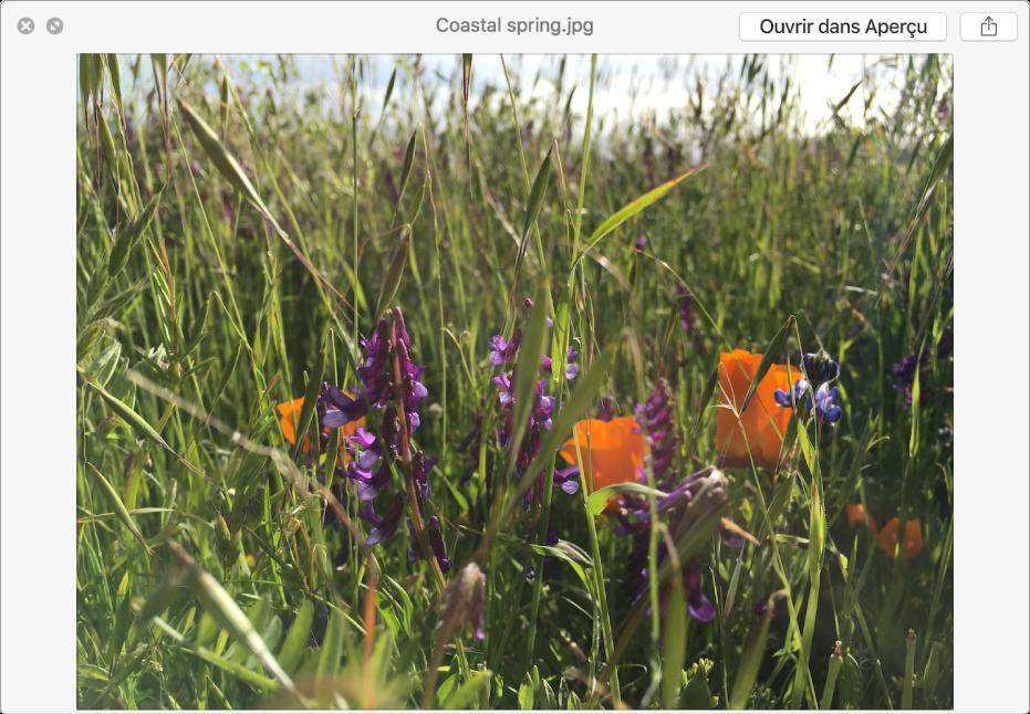 Une image dans la fenêtre Coup d'œil, avec des boutons permettant d'afficher un aperçu en plein écran, d'ouvrir le fichier ou de le partager.