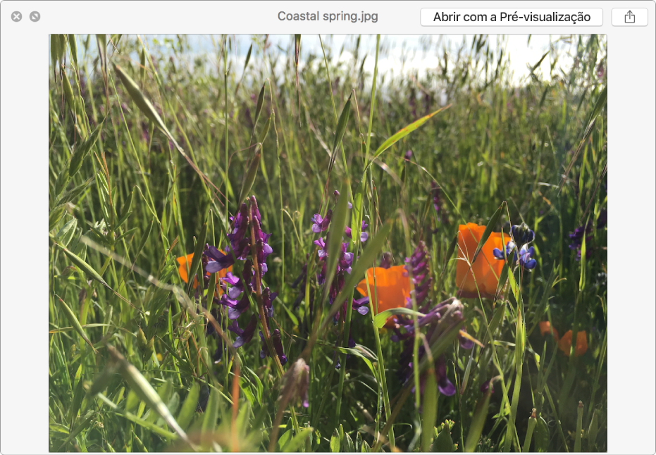 Uma imagem na janela de Vista rápida com botões para ver uma pré-visualização de ecrã completo, abrir o ficheiro ou partilhar o ficheiro.