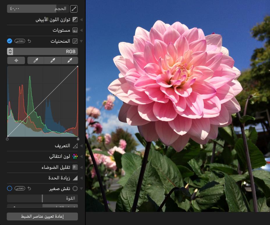 الصورة قبل تعديلات المنحنيات.