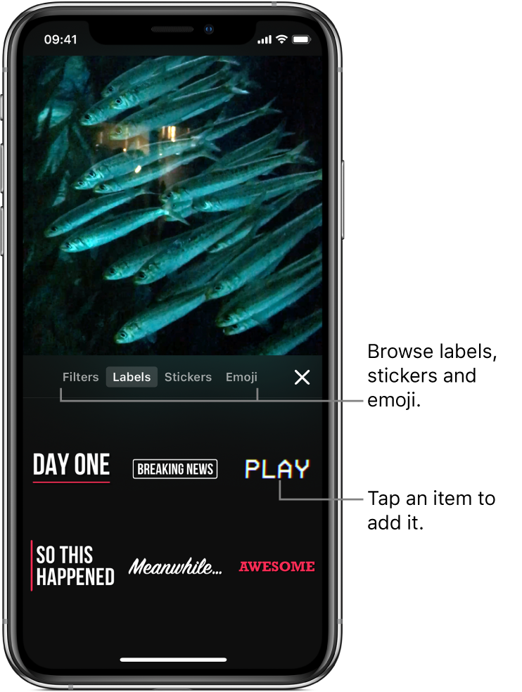 A video image in the viewer, with Labels selected and label options shown below.