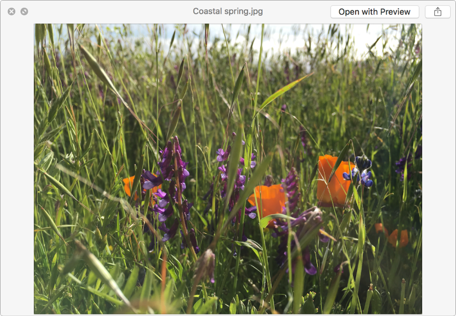 An image in the Quick Look window with buttons to see a full-screen preview, open the file, or share the file.