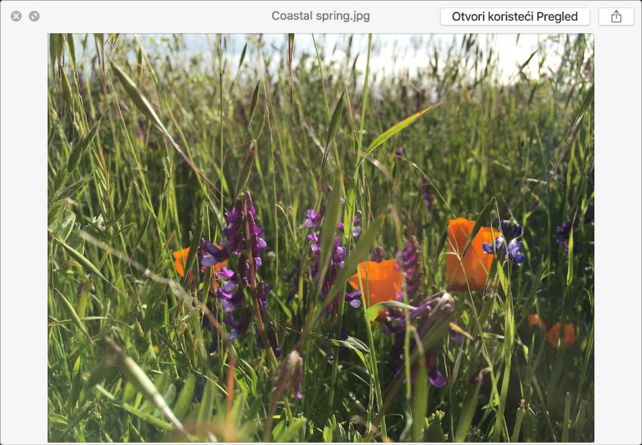 Slika u prozoru Brzi pregled s tipkama za pregled prikaza preko cijelog zaslona, otvaranje ili dijeljenje datoteke.