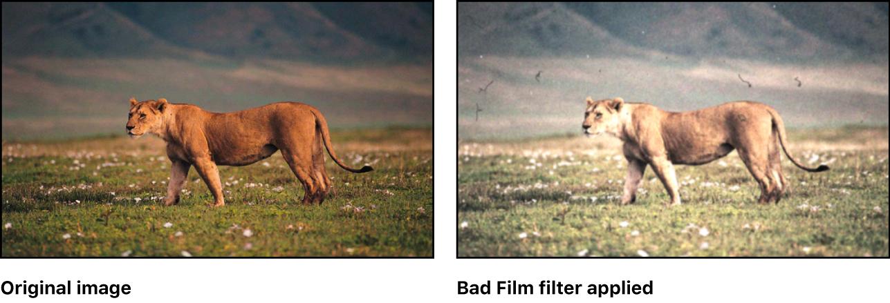 """Canvas mit dem Effekt des Filters """"Beschädigter Film"""""""