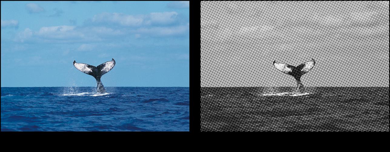 "Canvas mit dem Effekt des Filters ""Halbton"""