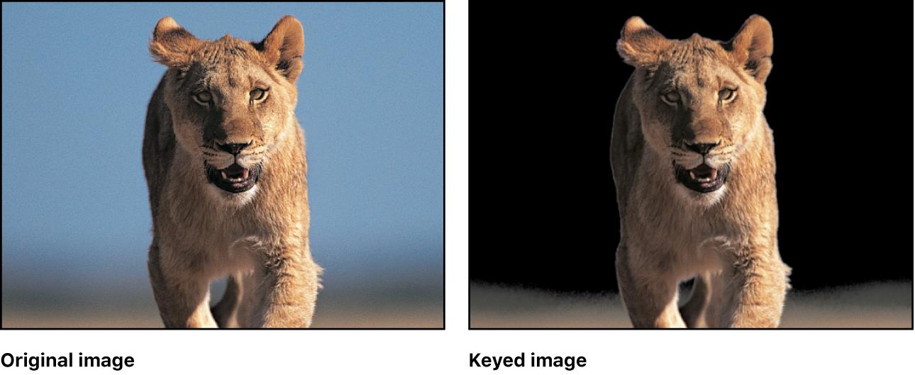 Vergleich eines Clips vor und nach dem Keying im Canvas