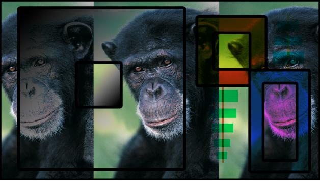 """Canvas mit Kombination aus Farbfeldern und dem Affen unter Verwendung der Füllmethode """"Abdunkeln"""""""