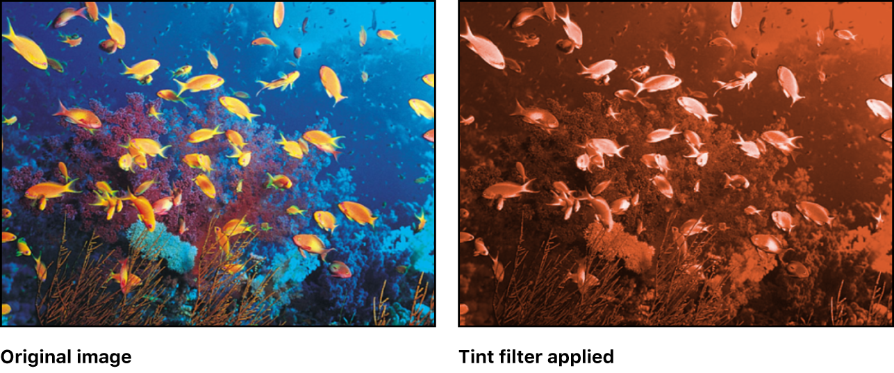 Canvas showing effect of Tint filter