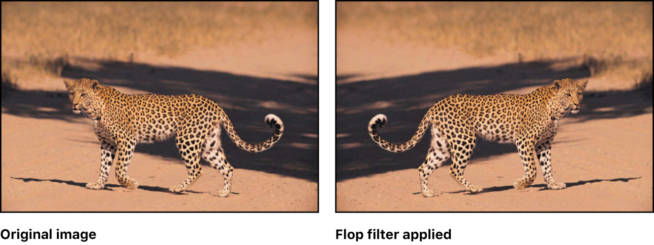 canvas showing effect of Flop filter