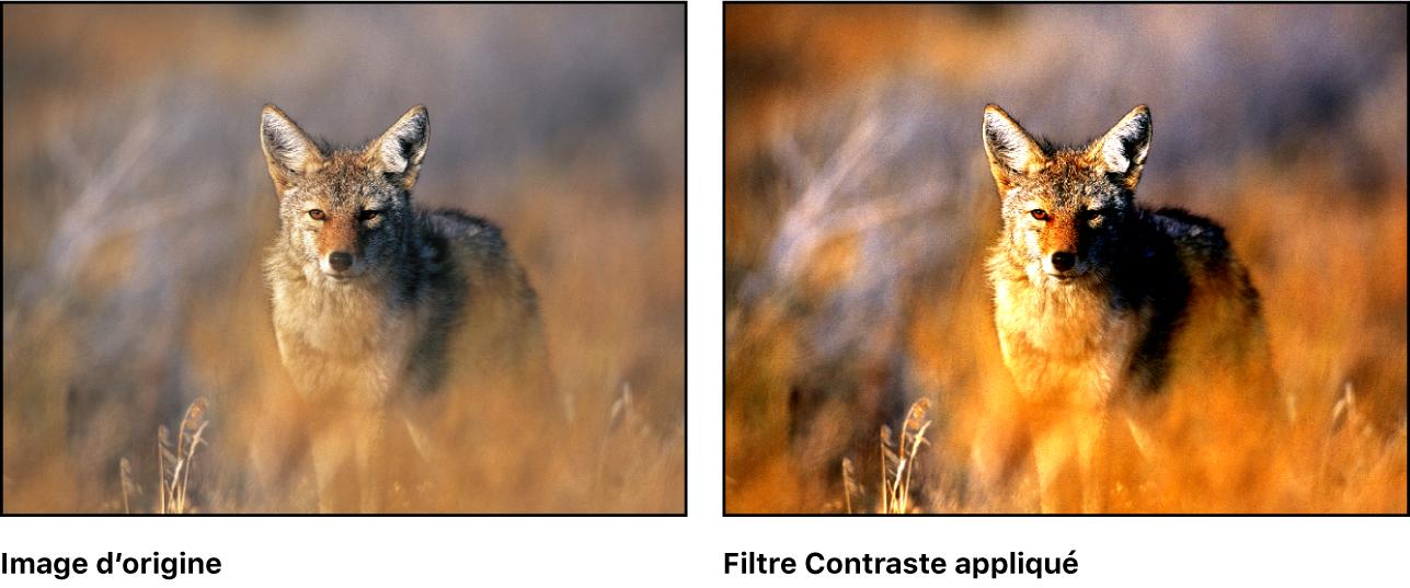 Canevas affichant l'effet du filtre Contraste
