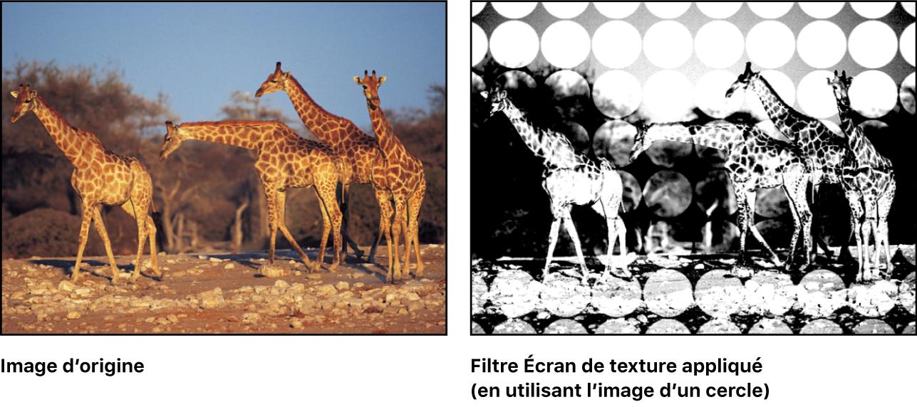 Canevas affichant l'effet du filtre Écran de texture