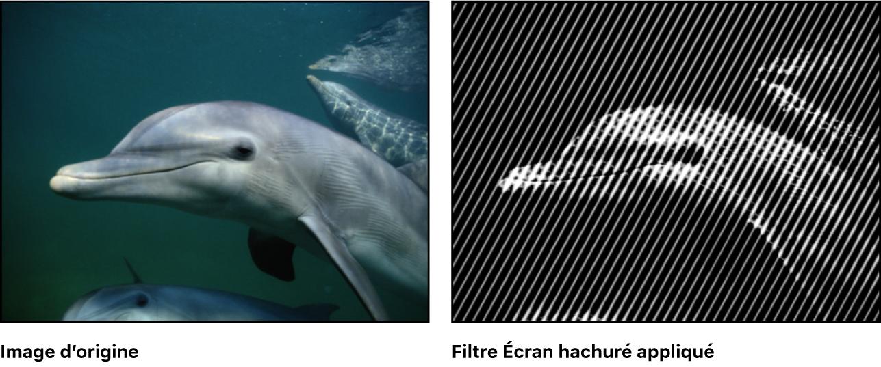 Canevas affichant l'effet du filtre Écran hachuré