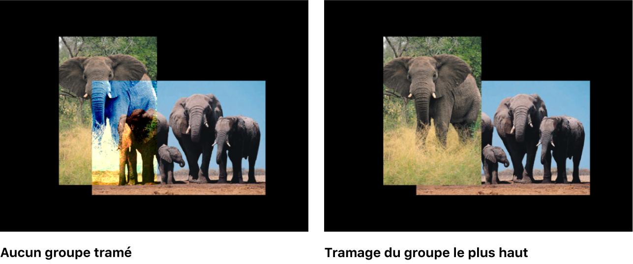 Canevas affichant les groupes2D avant et après le tramage