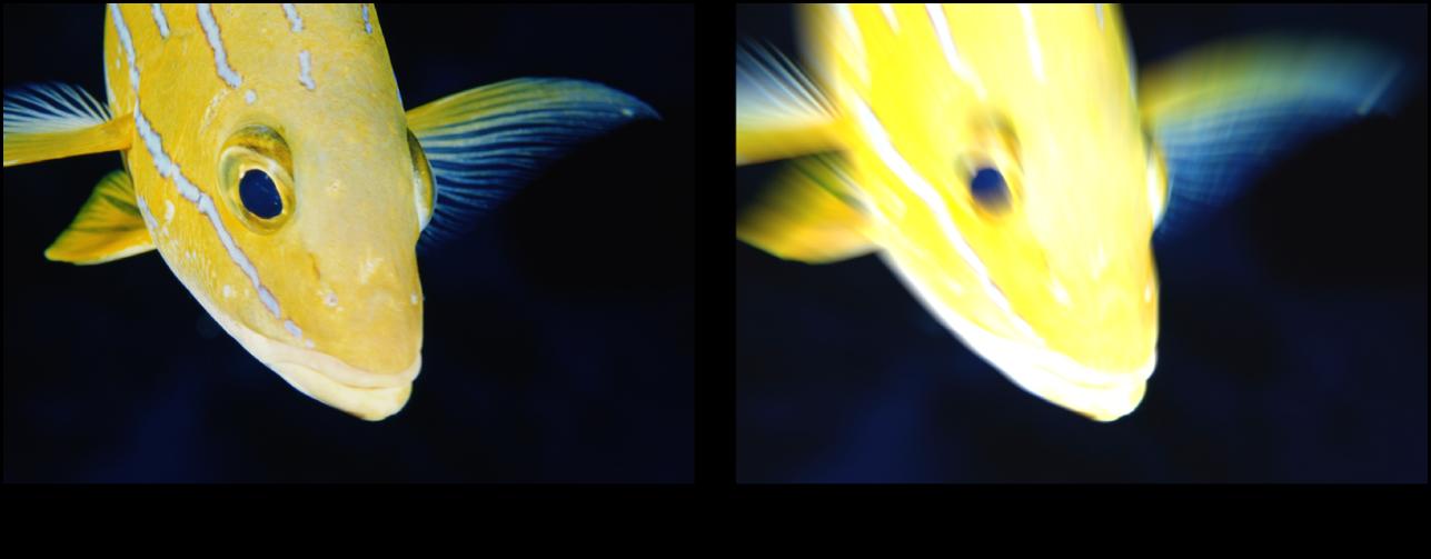 Canevas affichant l'effet du filtre Rayons de lumière