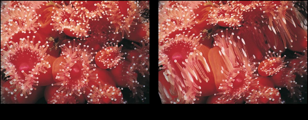 Canevas affichant l'effet du filtre Galerie des glaces
