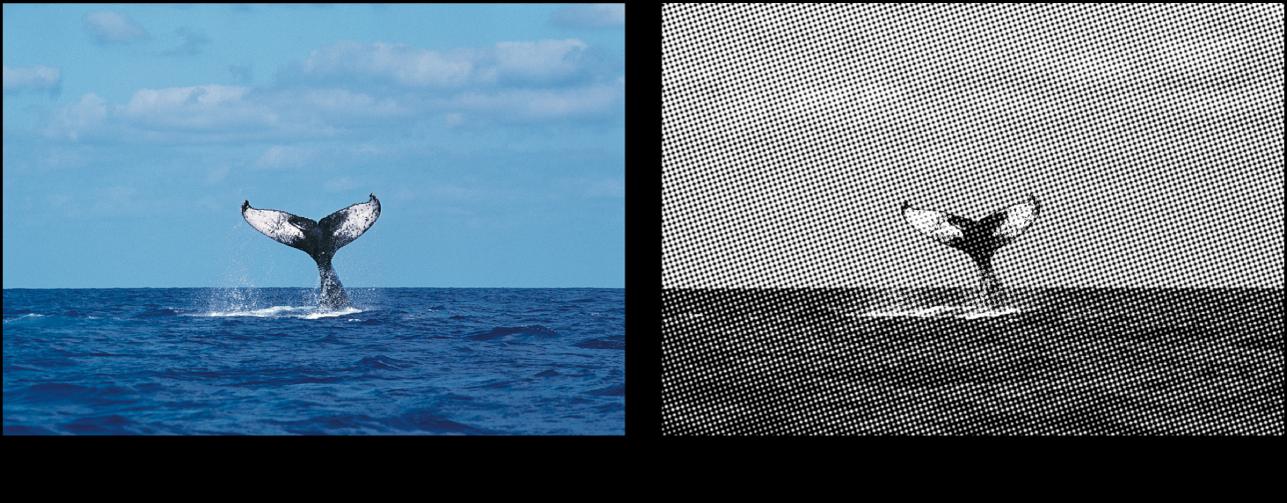 Canevas affichant l'effet du filtre Similigravure