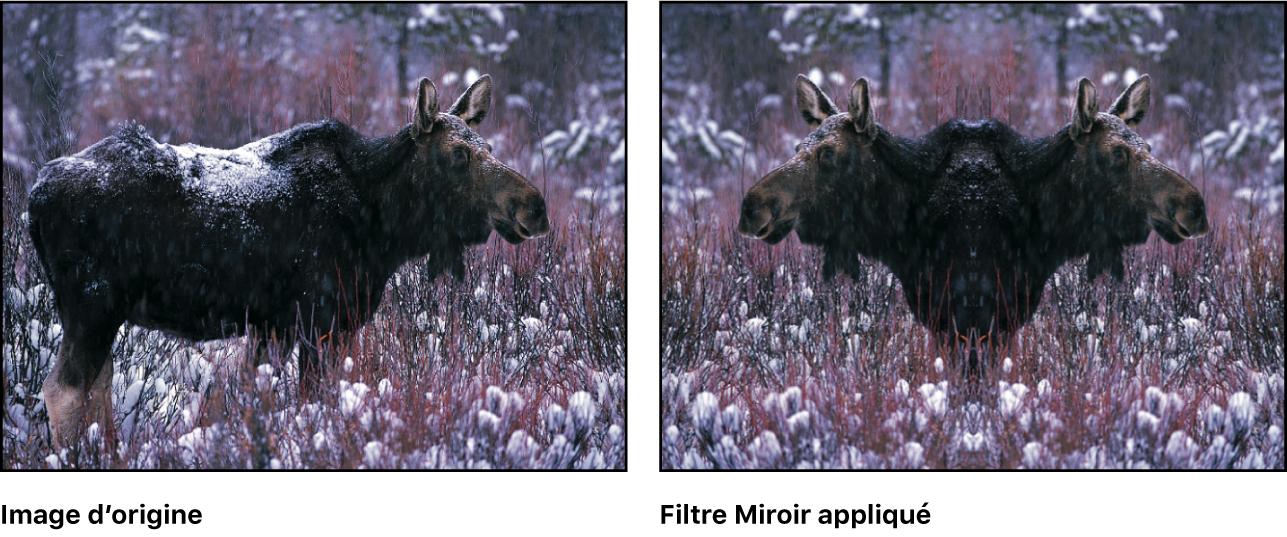 Canevas affichant l'effet du filtre Miroir