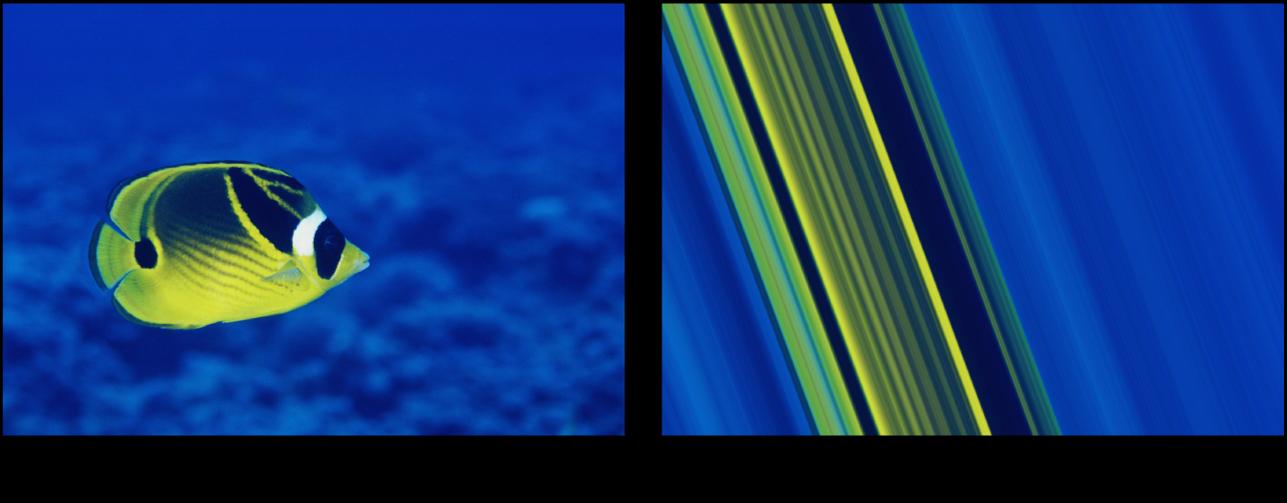 Canevas affichant l'effet du filtre Rayures