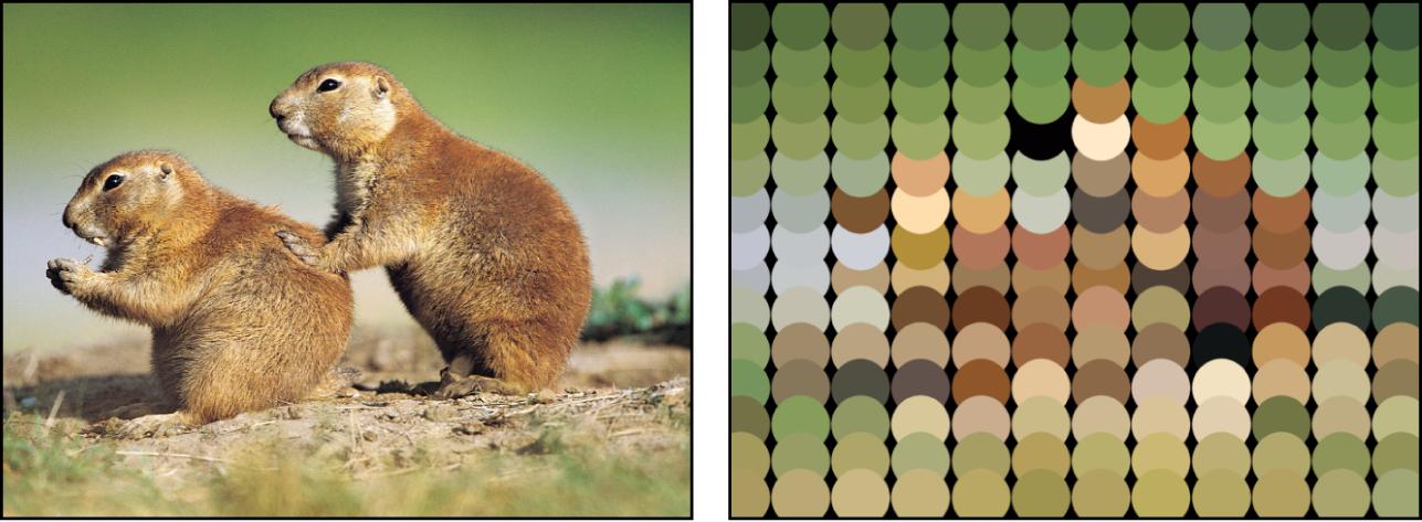 Canevas affichant un réplicateur défini sur «Prendre la couleur de l'image»