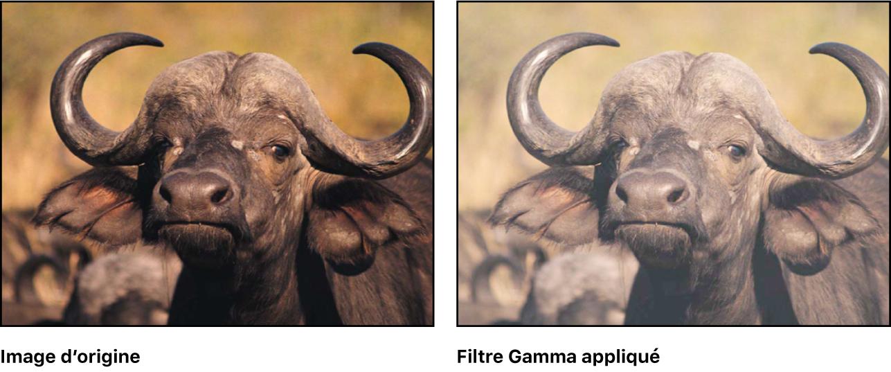 Canevas affichant l'effet du filtre Gamma