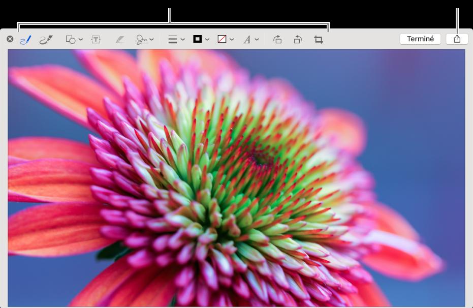 Une image de la fenêtre d'annotation affichant la barre d'outils d'annotation et le bouton Partager en haut à droite, en regard du bouton Terminé.