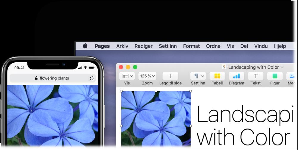 En iPhone som viser et bilde, ved siden av en Mac som viser at bildet limes inn i et Pages-dokument.