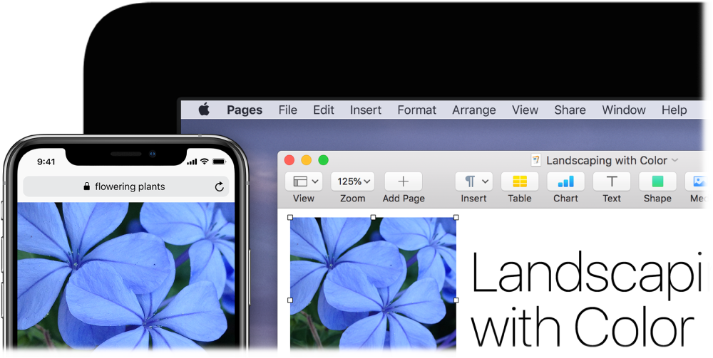 An iPhone displaying a photo, next to a Mac showing the photo being pasted into a Pages document.