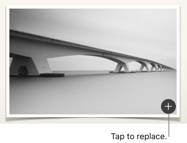An image with the Replace Image button.
