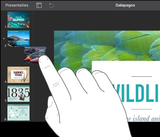 Afbeelding van een vinger waarmee een diaminiatuur in het dianavigatiepaneel wordt gesleept.