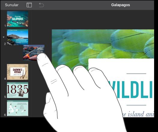 Slayt gezgininde küçük bir slayt resmini sürükleyen parmak görüntüsü.