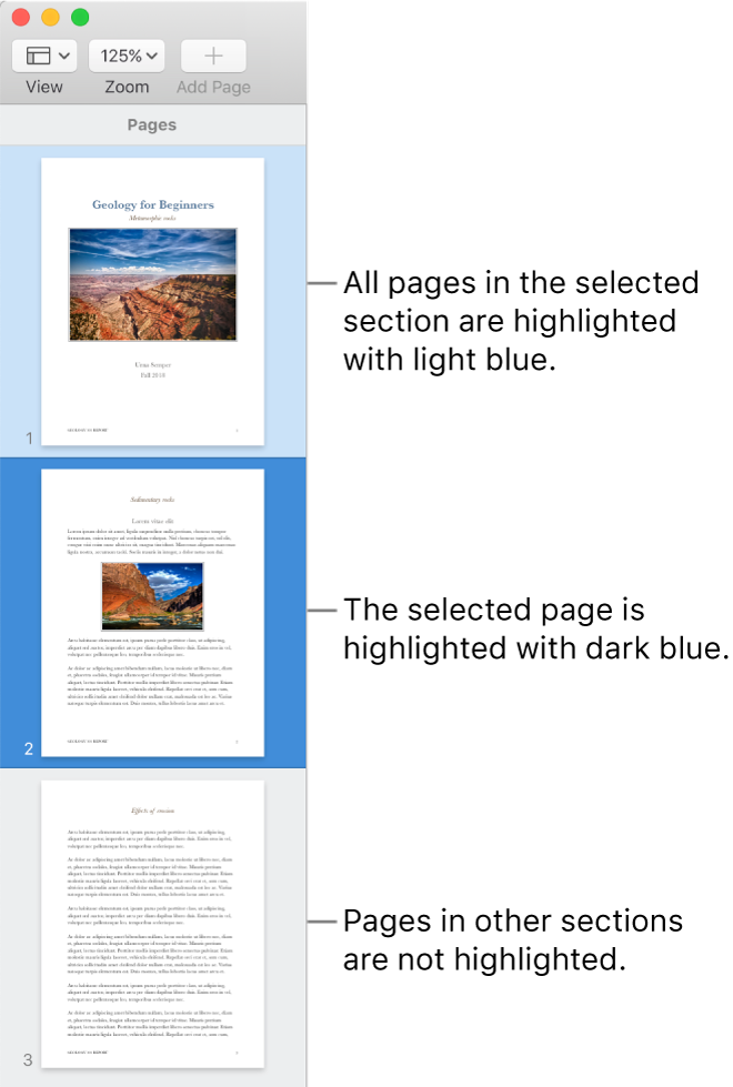 The Thumbnail View sidebar with the selected page highlighted in dark blue and all pages in the selected section highlighted in light blue.