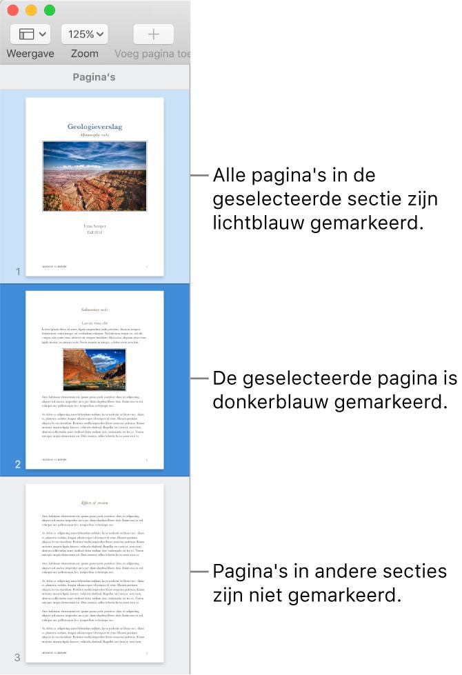 De miniatuurweergave met de geselecteerde pagina donkerblauw gemarkeerd en alle andere pagina's in de geselecteerde sectie lichtblauw gemarkeerd.