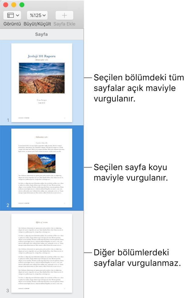 Seçilen sayfa koyu maviyle ve seçilen bölümdeki tüm sayfalar açık maviyle vurgulanmış olan Küçük Resim Görüntüsü kenar çubuğu.