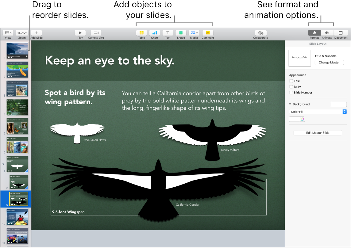 A Keynote window showing how to reorder slides, and identifying buttons that let you add objects to slides, including format and animation options.