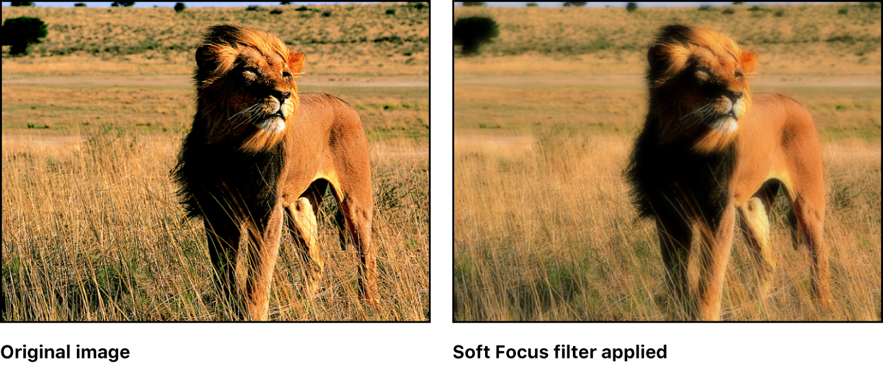 Canvas showing effect of Soft Focus filter