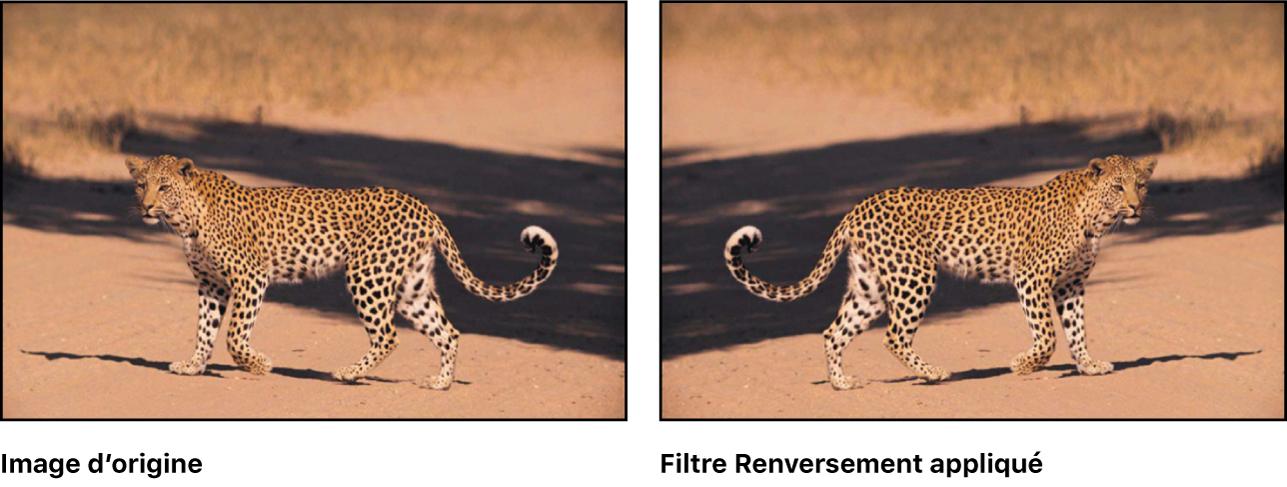 Canevas affichant l'effet du filtre Retournement