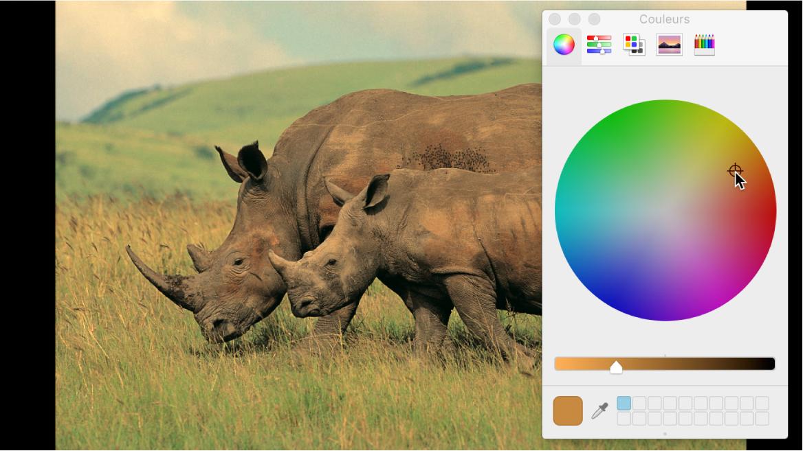 Utilisation de la fenêtre Couleurs pour modifier la balance des couleurs d'une image