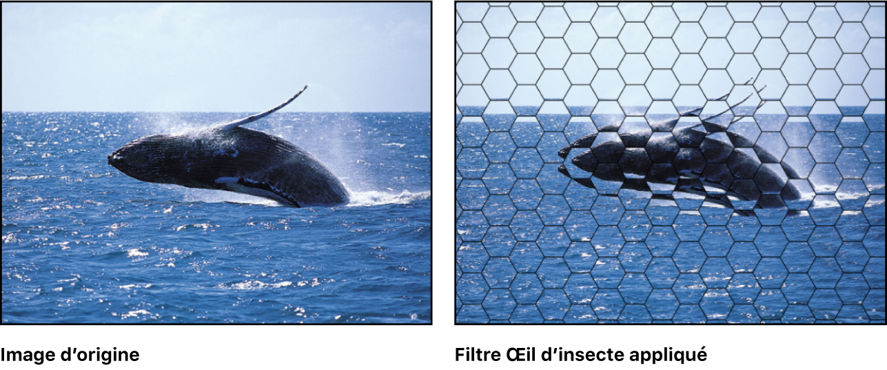 Canevas affichant l'effet du filtre Œil d'insecte