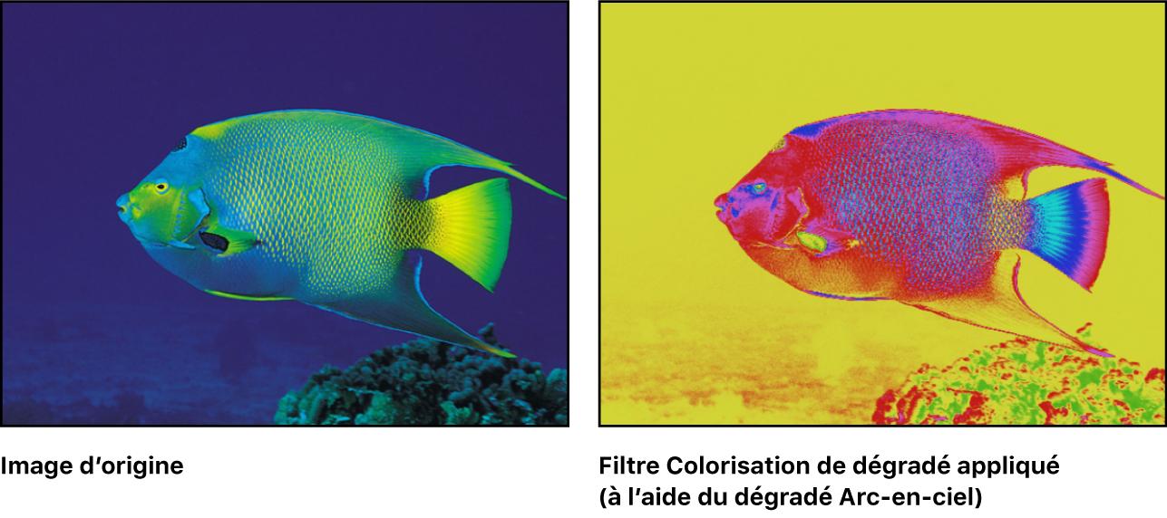 Canevas affichant l'effet du filtre Coloriser