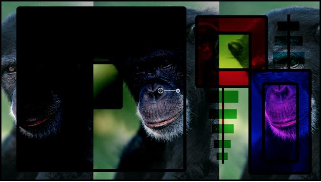 Canevas affichant les boîtes et le singe fusionnés à l'aide du mode Densité linéaire+