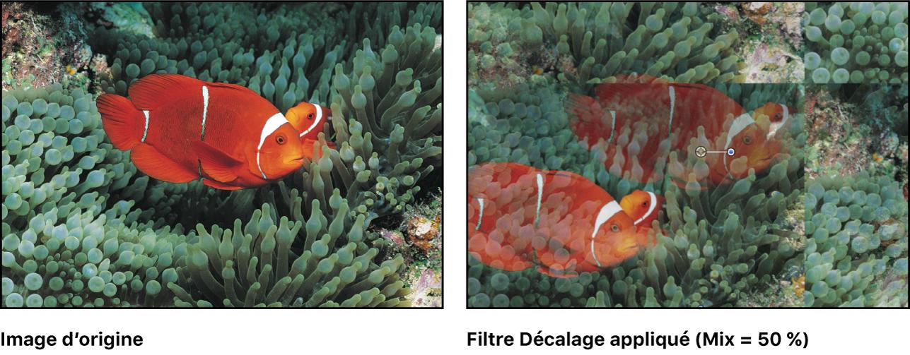Canevas affichant l'effet du filtre Décalage