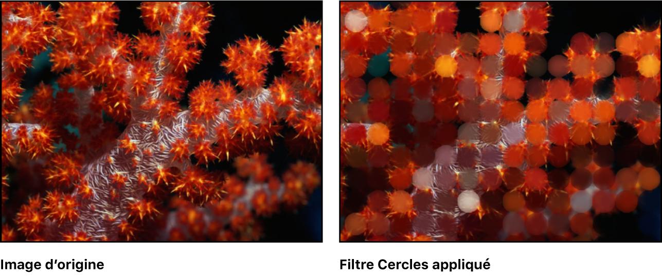 Canevas affichant l'effet du filtre Cercles