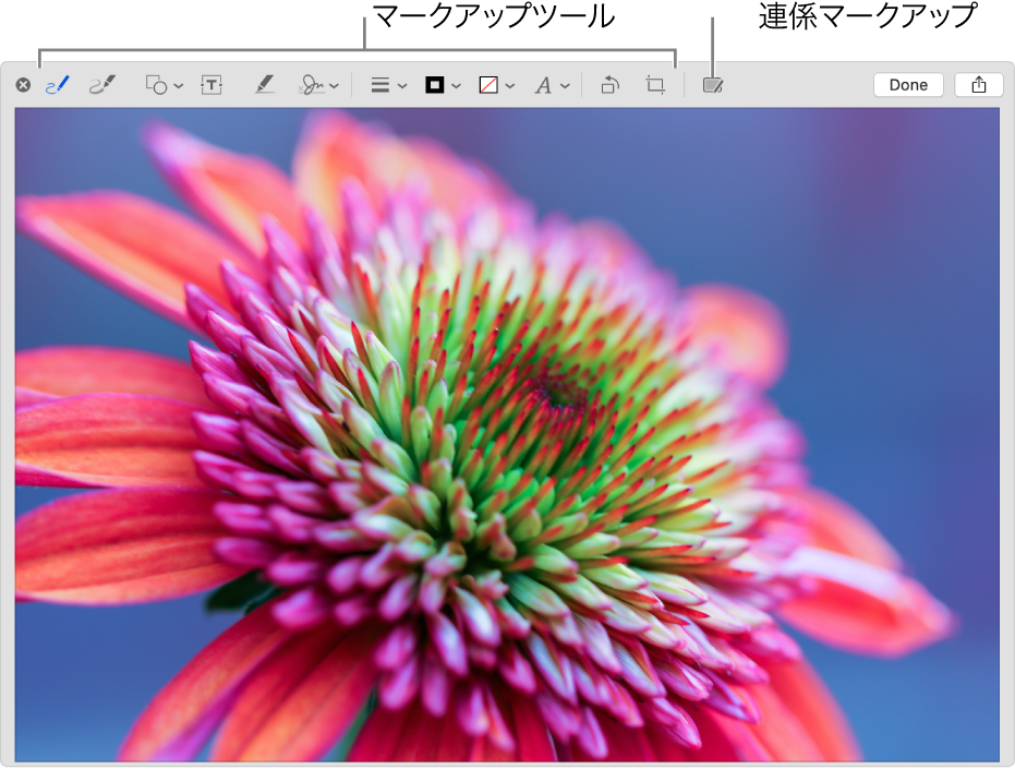 「マークアップ」ウインドウのイメージ。マークアップツールのツールバーと、近くにあるiPhoneまたはiPadで連係マークアップを使用する場合にクリックするツールが表示されています。