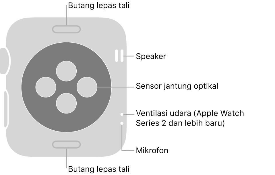 Bahagian belakang Apple Watch Series 3 dan lebih awal dengan petak bual menunjuk ke butang lepas tali, speaker, sensor jantung optikal, liang udara dan mikrofon.