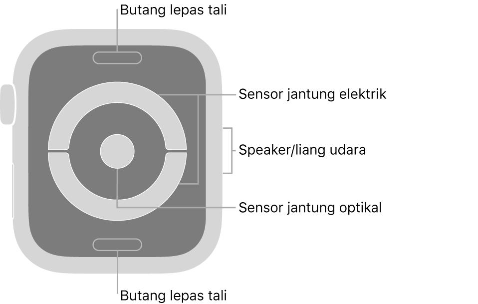Bahagian belakang Apple Watch Series 4 dengan petak bual menunjuk ke butang lepas tali, sensor jantung elektrik, speaker/liang udara dan sensor jantung optikal.