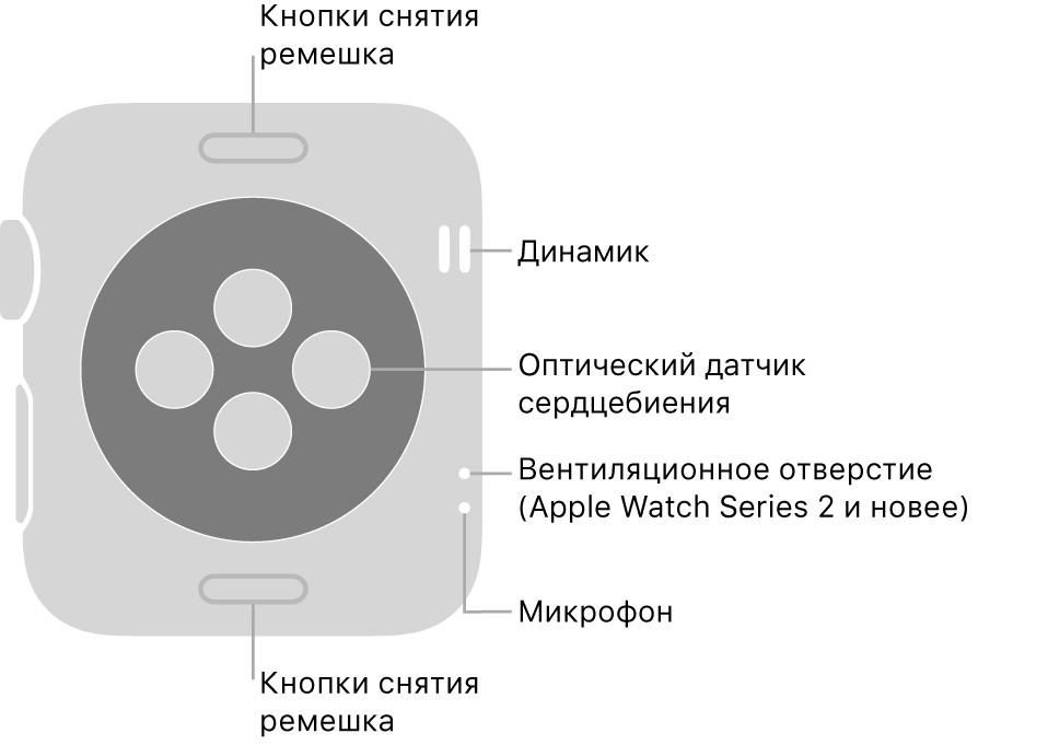 Оборотная сторона AppleWatch Series3 или предыдущей модели и выноски, указывающие на кнопку смены ремешка, динамик, оптический датчик сердцебиения, вентиляционное отверстие и микрофон.