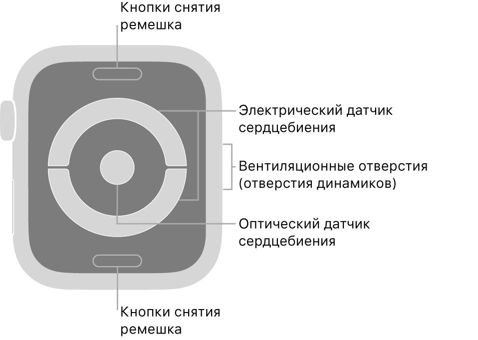 Оборотная сторона AppleWatch Series4 и выноски, указывающие на кнопку снятия ремешка, электрический датчик сердцебиения, вентиляционные отверстия (отверстия динамиков), и оптический датчик сердцебиения.