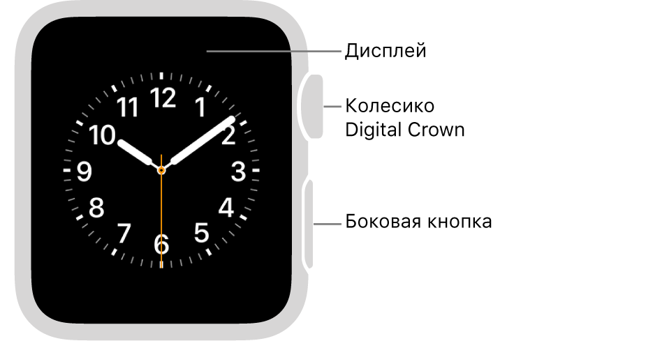 Лицевая сторона AppleWatch Series3 или предыдущей модели и выноски, указывающие на дисплей, колесико DigitalCrown и боковую кнопку.